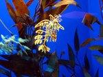 Plantfish